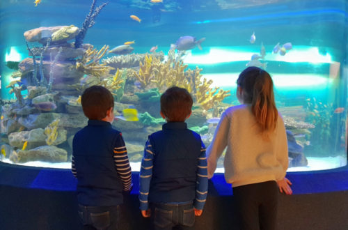 Two Oceans Aquarium Cape Town