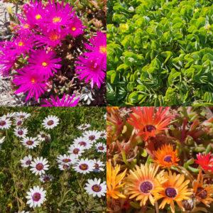 West Coast Spring Flowers