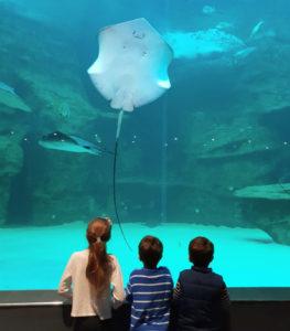 Stingray Two Oceans Aquarium