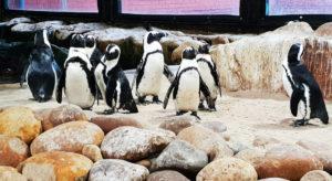 Penguin Exhibit Two Oceans Aquarium