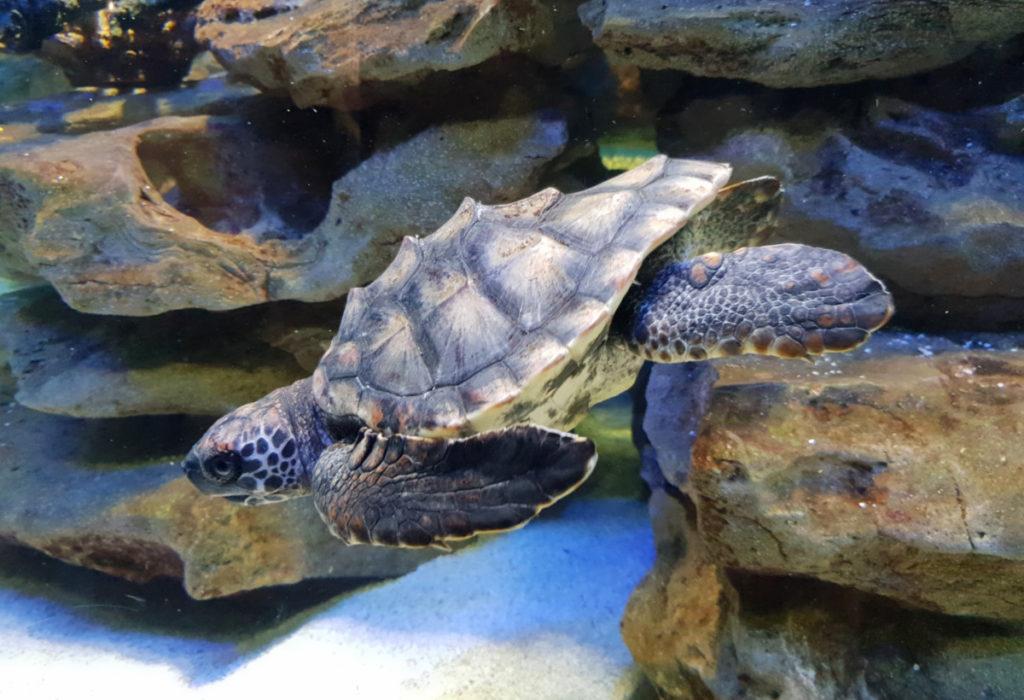 Turtle Two Oceans Aquarium
