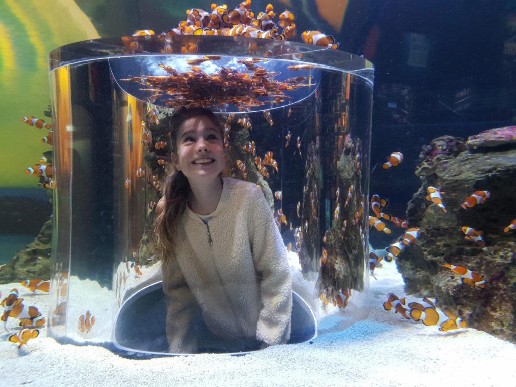 Two Oceans Aquarium With Kids