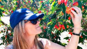 Cherry Picking Klondyke Farm