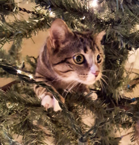 Christmas-traditions-cat-in-tree