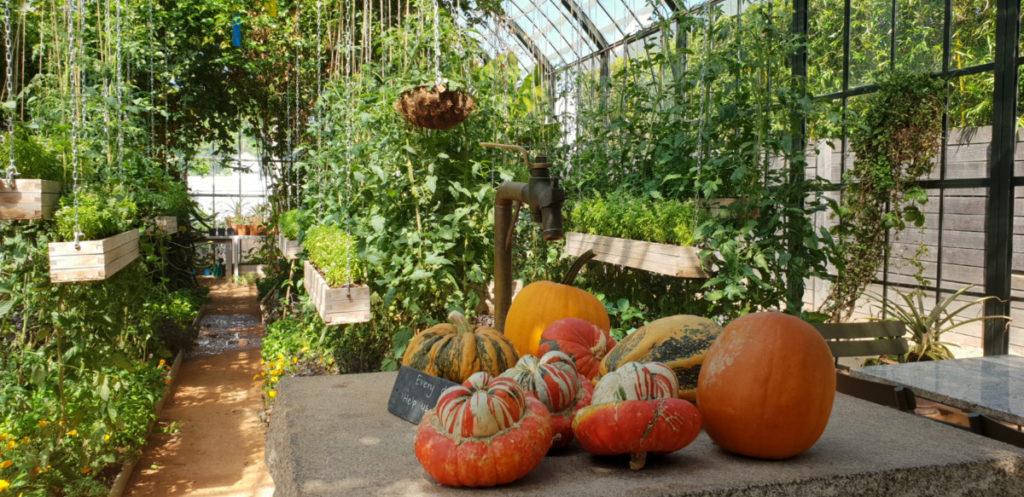 Pumpkin display inside Greenhouse Restaurant a Babylonstoren