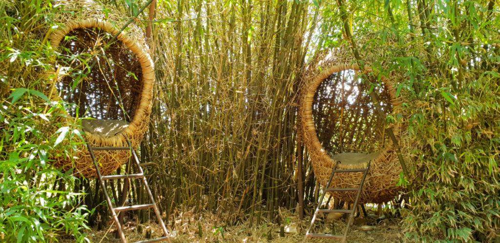 Weaver Nests Babylonstoren