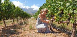 Eikendal Stellenbosch Vineyards