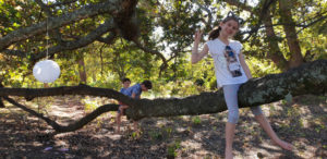Climbing The Oak Trees At Oak Valley Wine Estate Elgin Cool Fest