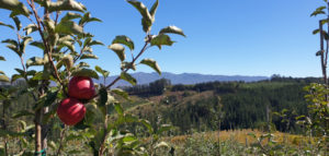 Oneiric Apple Orchard Elgin Cool Fest