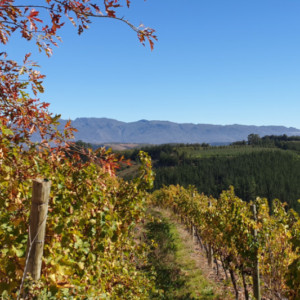 Oneiric Vineyards At Elgin Cool Wine and Country Festival