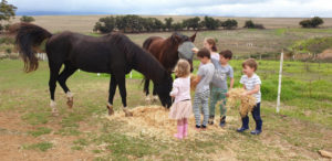 Kids feeding horses at Gloria Farm Villiersdorp