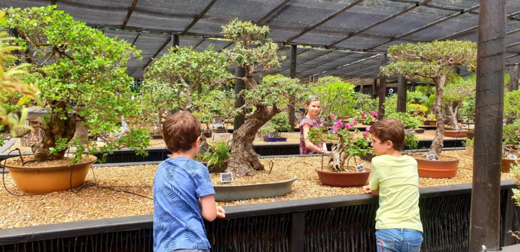 Bonsai display at Stellenbosch Botanical Garden