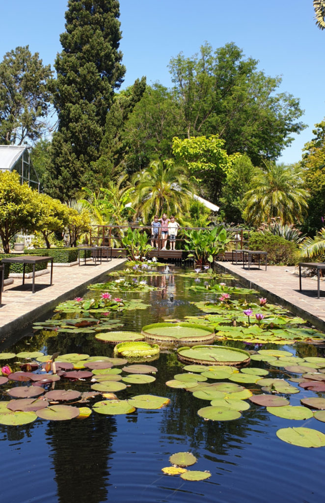 Lili pond at Stellenbosch Botanical Garden