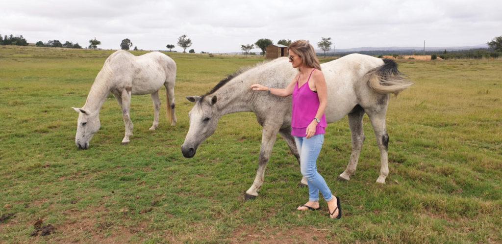 Mr Findlay, the cheeky horse at Kwetu in Swellendam