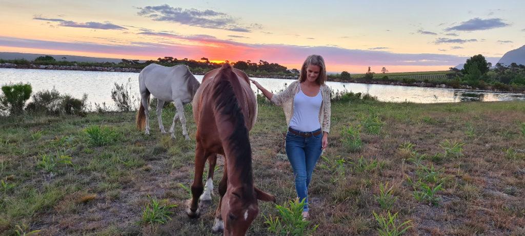 Horses munching grass at sunset next to dam
