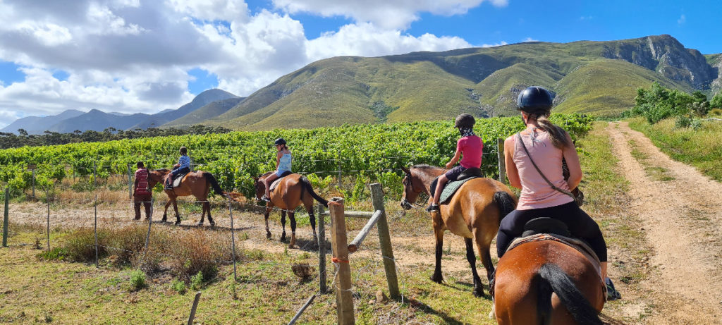 Kids and mom horse riding through vineyards at Stanford Hills Estate