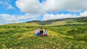 Kids sitting amongst yellow spring wild flowers in Darling
