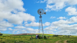 A wind pump in the Darling countryside in spring